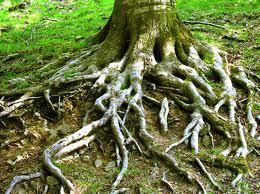 Kitaleitung für Naturkita / Waldkitagesucht
